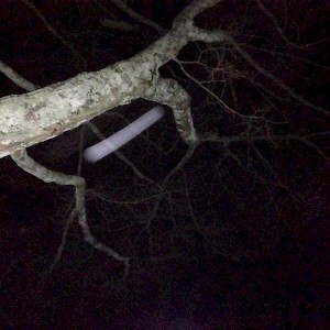 Orb caught in tree